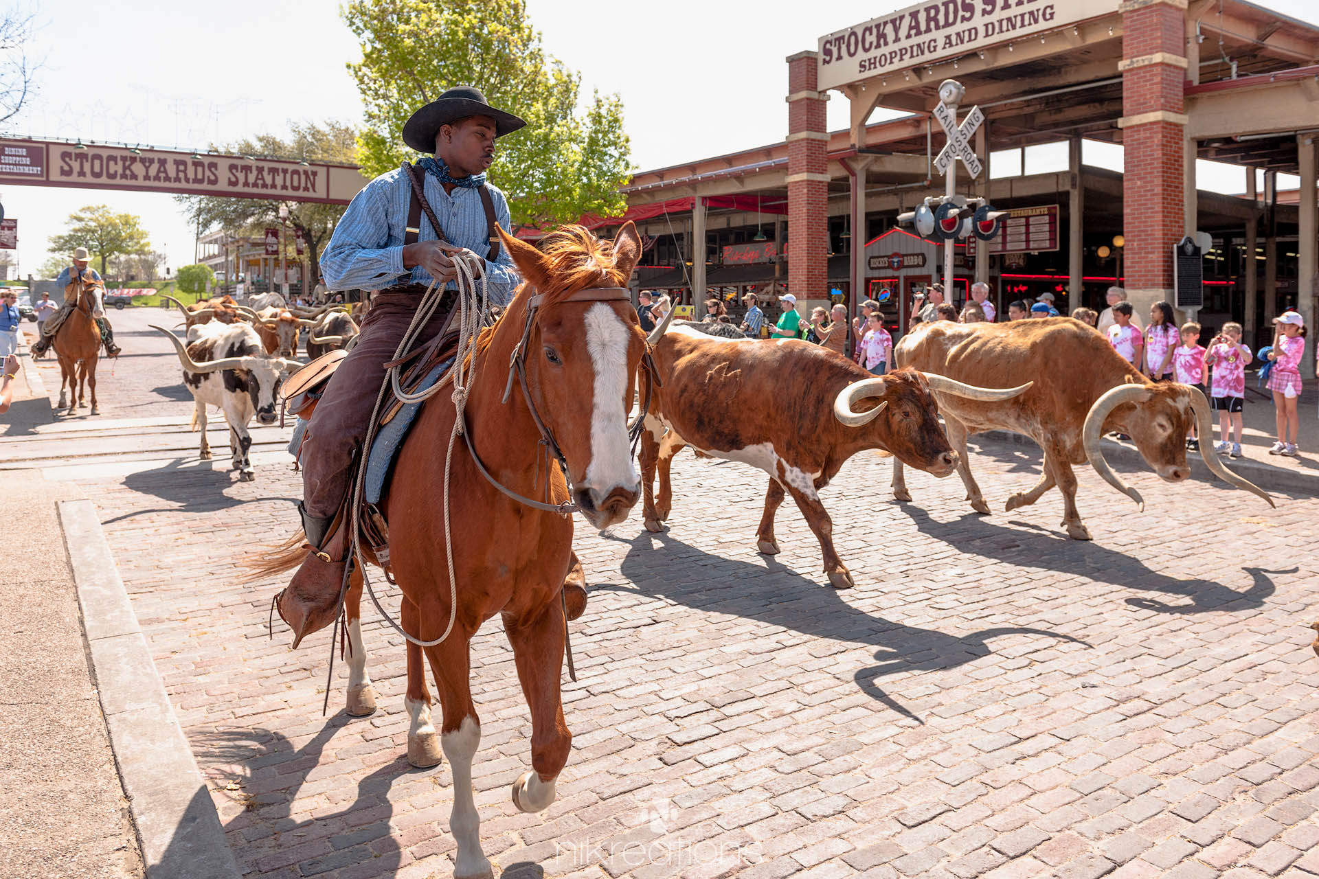 Cattle Drive, Fort Worth, USA